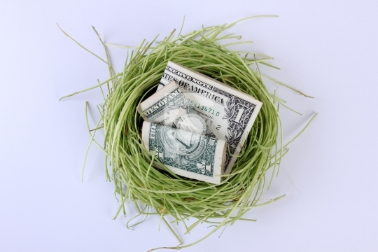 US Currency Dollars Notes in a Bird's Nest