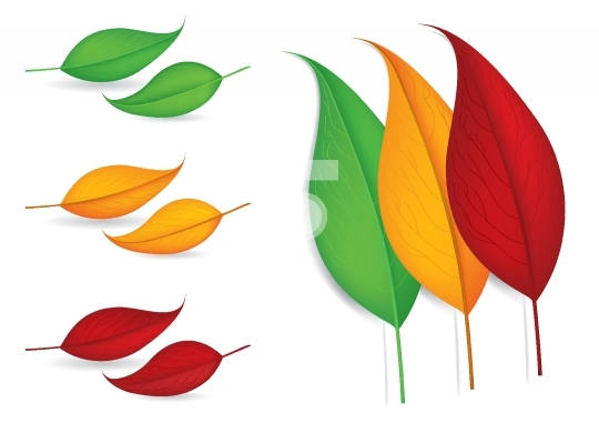 Autumn Leaves - Vector Illustrations