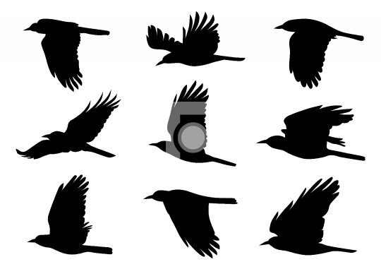 Birds in Flight - 9 Vector Illustrations