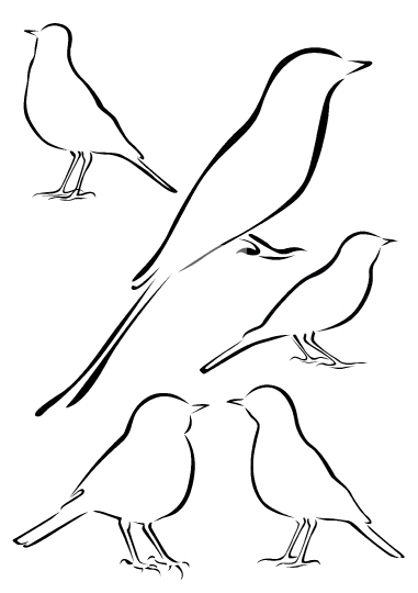 Birds Vector Illustrations in Brush Strokes