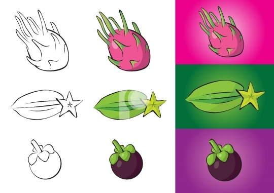 Exotic fruits illustrations - dragon fruit, carambola, mangostee